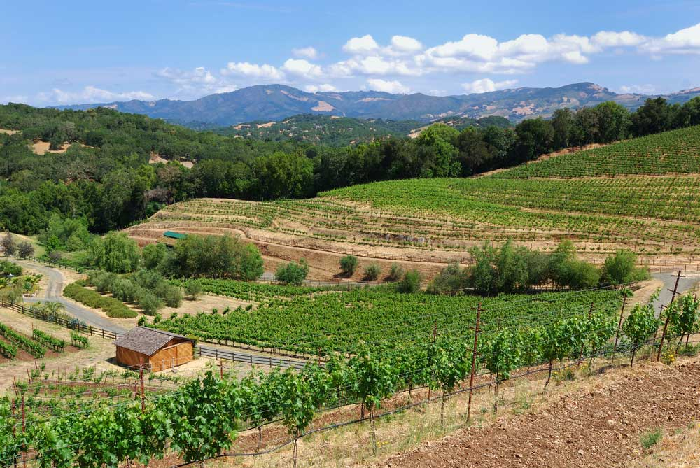 biodynamic winery in sonoma